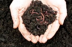 worms for my wormery