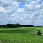 Monoculture Farming