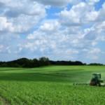 Monoculture Farming