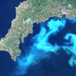 algae bloom off coast of Britain