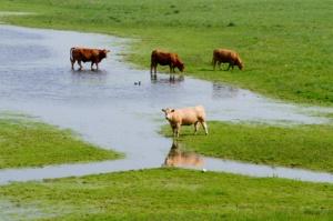 flooded famrland