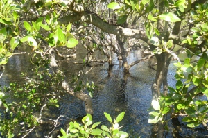 importance of mangroves